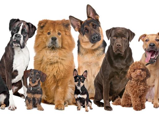 Φυλές σκύλων Γιγαντόσωμος