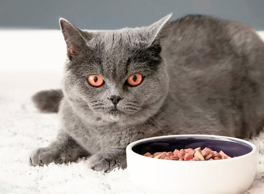 Υγρή ή ξηρά τροφή - Τι πρέπει να τρώει μια γάτα