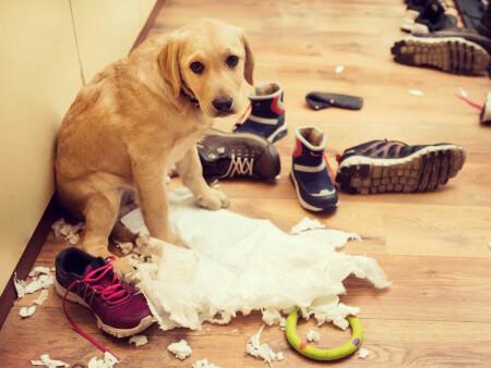 Πως να μάθω το Σκύλο μου να μην τρώει πράγματα;