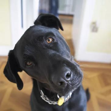 Έχετε Αναρωτηθεί ΓΙΑΤΙ οι Σκύλοι γέρνουν το Κεφάλι όταν τους Μιλάμε; Δεν πάει το μυαλό σας!