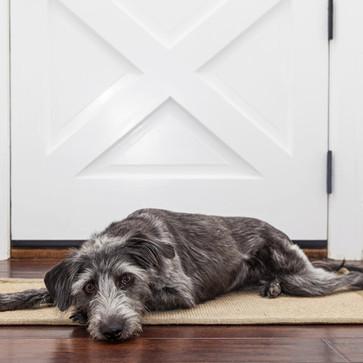 Πώς να αφήνω τον σκύλο μου μόνο στο σπίτι με ασφάλεια.