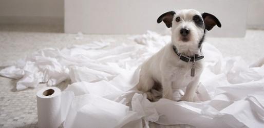 Εκπαίδευση Σκύλου για τουαλέτα σε 6 βήματα