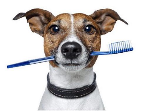 Κτηνιατρική Οδοντιατρική του σκύλου και της γάτας