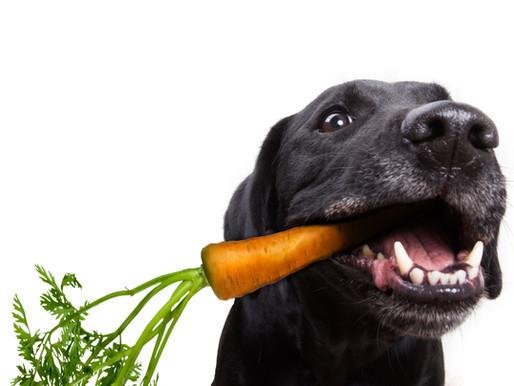 Ποια λαχανικά είναι κατάλληλα για το σκύλο μας;