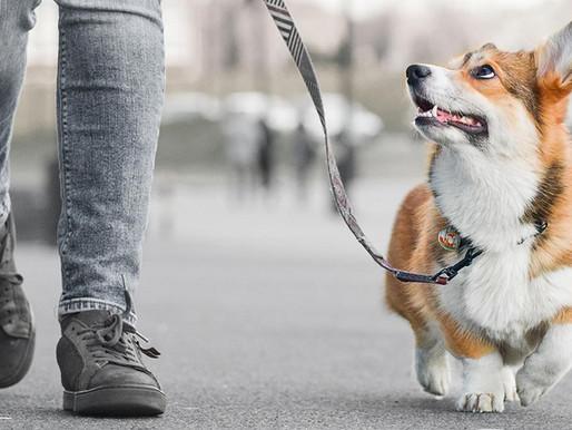Καλοκαιρινά tips για τις ευαίσθητες πατούσες του σκύλου μας!