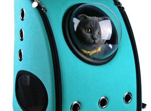 Ταξιδεύοντας με τη γάτα σας