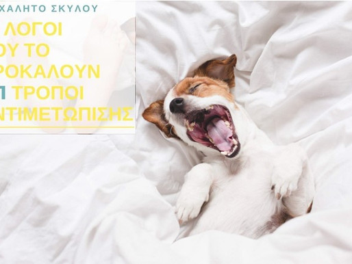 10 λόγοι που προκαλούν το ροχαλητό του σκύλου σας (5+1 τρόποι αντιμετώπισης)