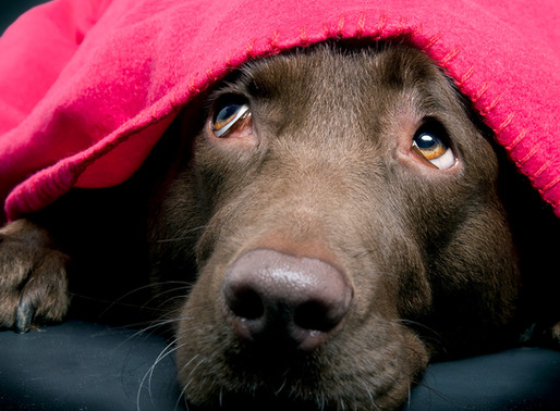 Κροτοφοβία και σκύλος