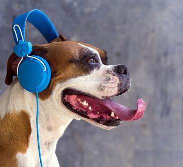 Αρέσει στους σκύλους η μουσική;