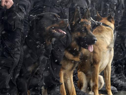 Σκύλος Φύλακας