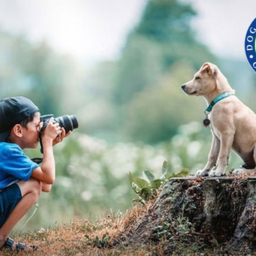 THE KENNEL CLUB                            DOG PHOTOGRAPHER OF THE YEAR