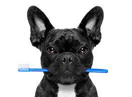 Βασική Οδοντιατρική του σκύλου και της γάτας