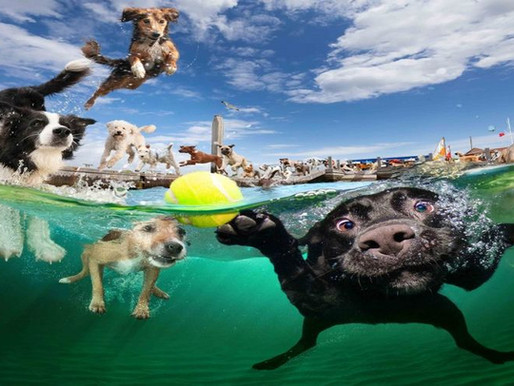 Πώς να κάνετε τον σκύλο σας να αγαπήσει το νερό και να νιώθει άνετα να κολυμπήσει!!!