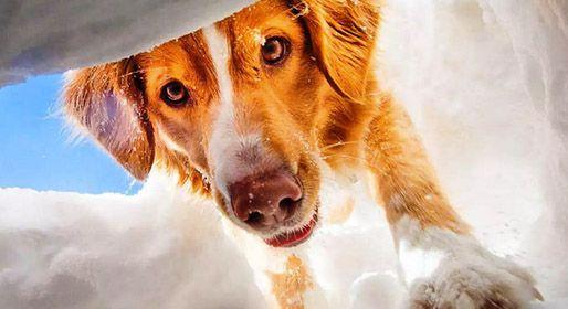 Γιατί οι σκύλοι διαισθάνονται το σεισμό και την καταιγίδα
