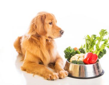 Πόσες θερμίδες χρειάζεται ένας σκύλος;