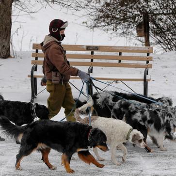 Η Βόλτα του σκύλου στο κρύο και τα χιόνια.