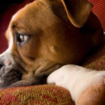 Γιατί δεν τρώει ο Σκύλος μου; 15 πιθανοί λόγοι!