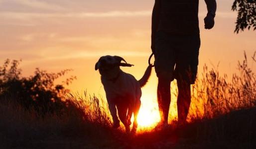 Οι σκύλοι χαρίζουν και χρόνια ζωής!!!
