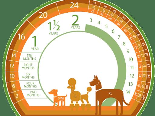 Πόσα χρόνια ζουν τα σκυλιά & Ποιοι παράγοντες επηρεάζουν το προσδόκιμο ζωής τους;