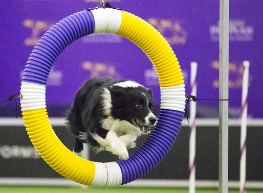 Agility – ένα άθλημα αποκλειστικά για σκύλους!