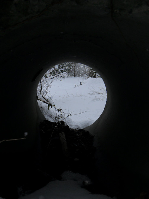 Looking Through the Storm Drain