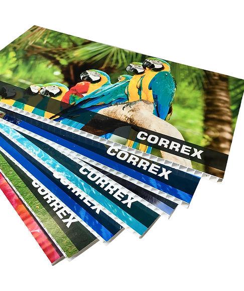 Correx_10mm_2 copy.jpg