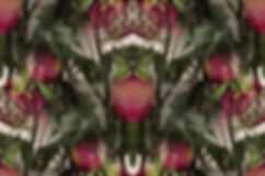 digital art with roses, image of roses, digital art with faded roses, image of flowers, image with antiqued colors,digital art with flowers,digital art by Jodi DiLiberto