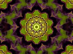 Digital mandala of a circle of bees encircled by a bright green and dark purple lotus,Digital Art by Jodi DiLiberto