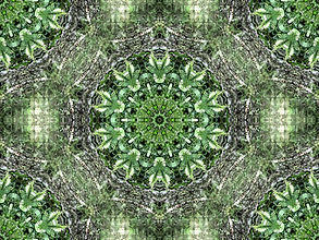 Digital image of green mandala, digital art with green mandala, image of abstract glassy web, abstract digital image of glassy web, circular image, digital art by Jodi DiLiberto