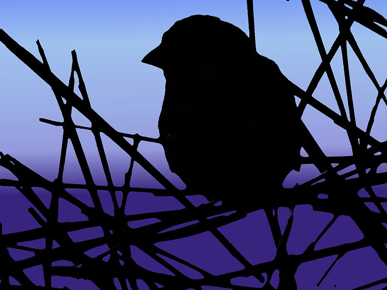 image of a the silhouette of a bird and branches against a deep blue and purple background,digital art with bird, photomanipulation by Jodi DiLiberto