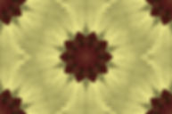 image of a stylized flower on a yellow  background, image by Jodi DiLiberto