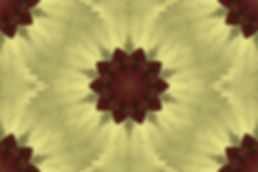 image of a stylized flower on a yellow  background, image by Jodi DiLiberto