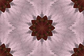 image of a stylized flower on a pink  background, image by Jodi DiLiberto