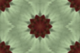 image of a stylized flower on a light green background, image by Jodi DiLiberto