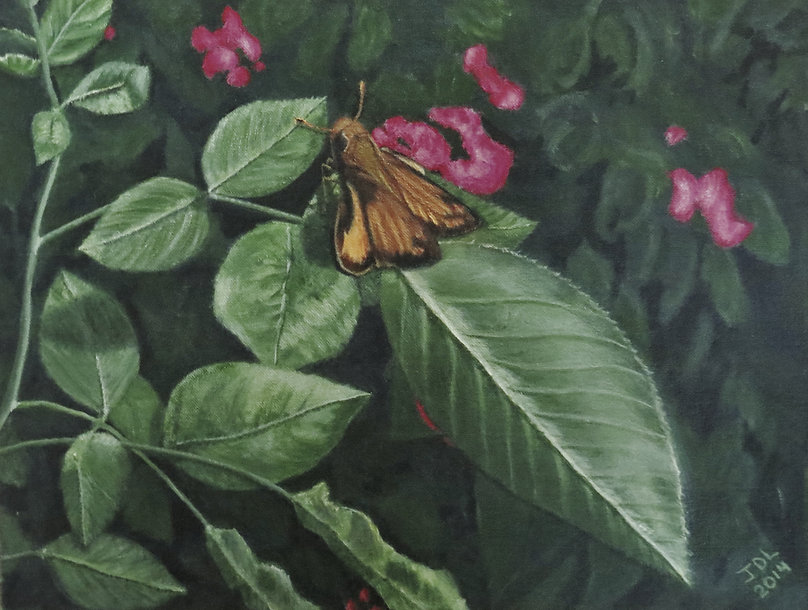 Painting of a butterfly, painting of a Zabulon skipper,painting of foliage,painting of a garden,painting of nature,painting by Jodi DiLiberto