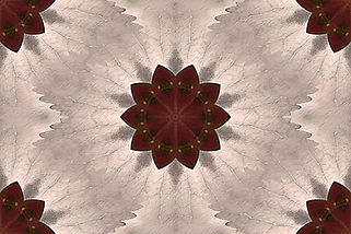 image of a stylized flower on a rosy beige background, image by Jodi DiLiberto