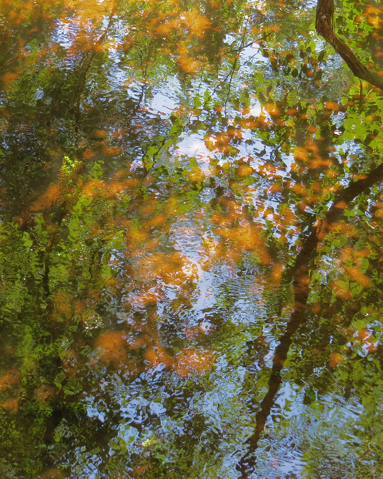 Photograph of an impressionistic pond with autum leaves, Photograph by Jodi DiLiberto