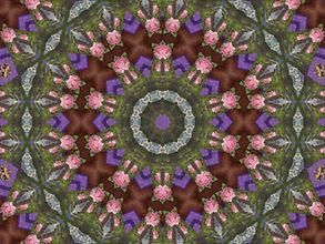 digital image of a floral mandala, digital image by Jodi DiLiberto, digital art by Jodi DiLiberto
