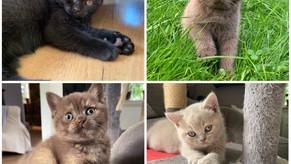 Fennels bebbar ❤️ Asterope,Bear,Tiggy och CeCe 9 veckor nu