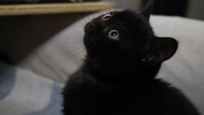Jag har en kattunge till salu