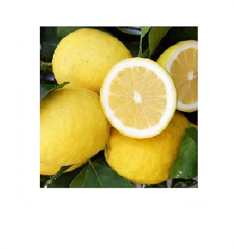 limão__siciliano1.png