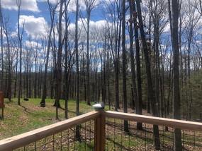 Pine Wood Deck V