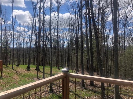 Pine Wood Deck View
