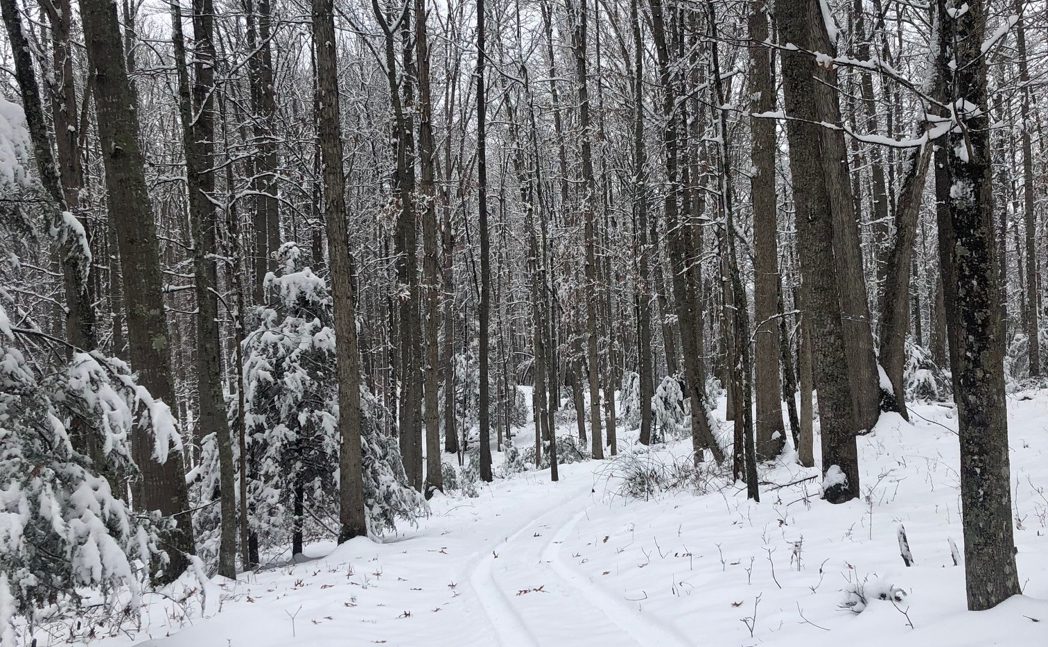 Snow Day Trail Pic