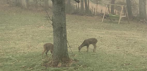 You may see Deers
