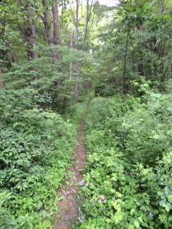 Crow Lane Nature Trail