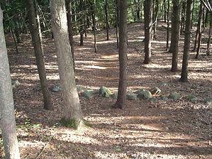 LRNT First Forest Path.JPG