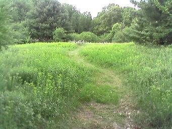 Upper Pasture - Cooper North.jpg