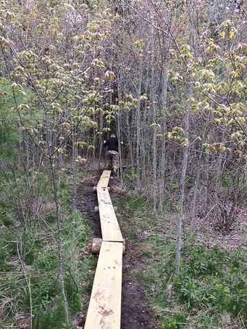 A stretch of bog bridge.JPG