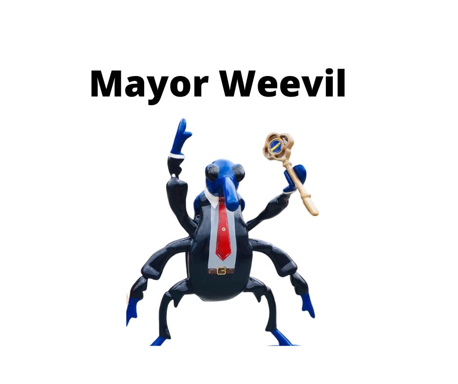 Mayor Weevil